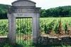 Vineyard of Gevrey Chambertin