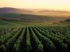 Les vignes les plus célèbres du monde