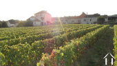 neighbouring marcheseuil vines