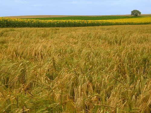<en>Champagne, rich agriculture</en><fr>Champagne, agriculture riche</fr><nl>Champagne, vruchtbare velden</nl>