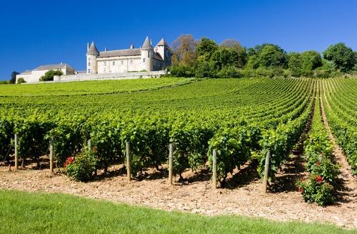 <en>wine and more wine of course</en><fr>vin, du vin et plus de vin</fr><nl>wijn natuurlijk</nl>