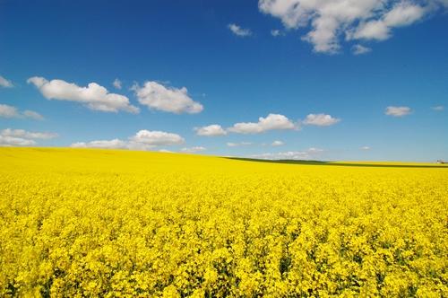 <en>the beauty of agriculture</en><fr>où l'agriculture règne</fr><nl>landbouw regeert hier</nl>